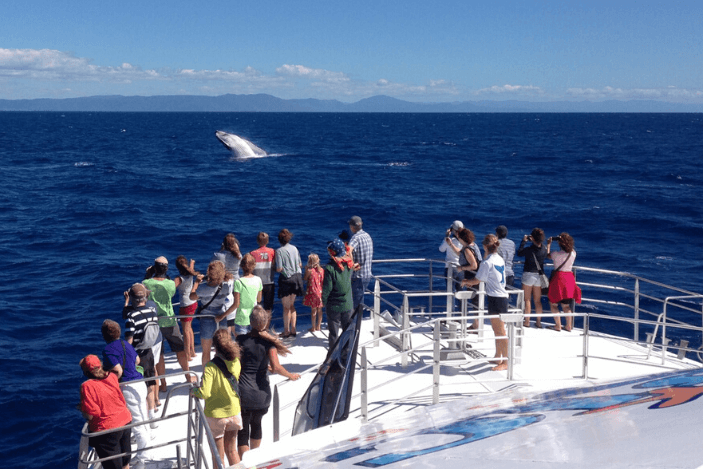 Whale Watching Tours Cairns